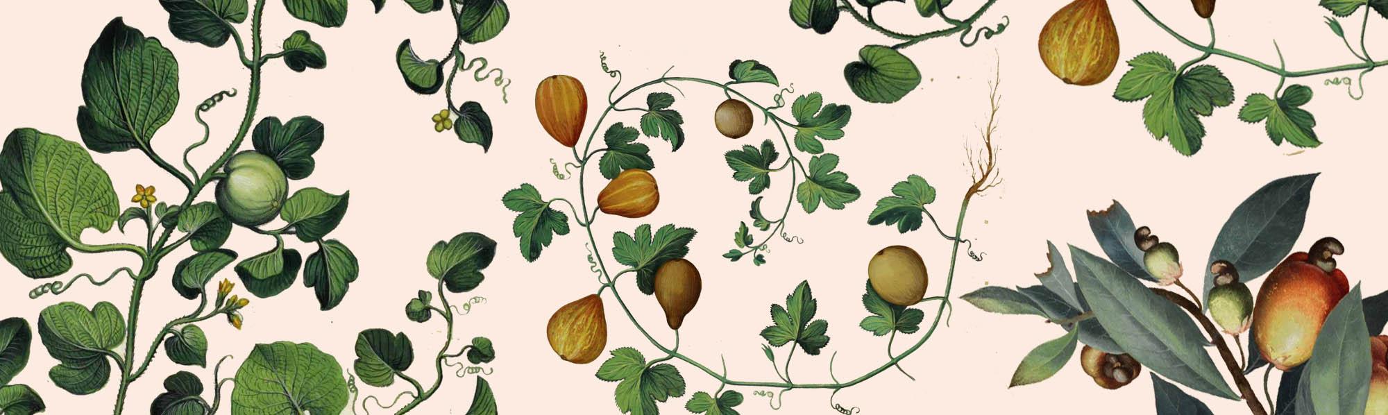 botanic-cover2