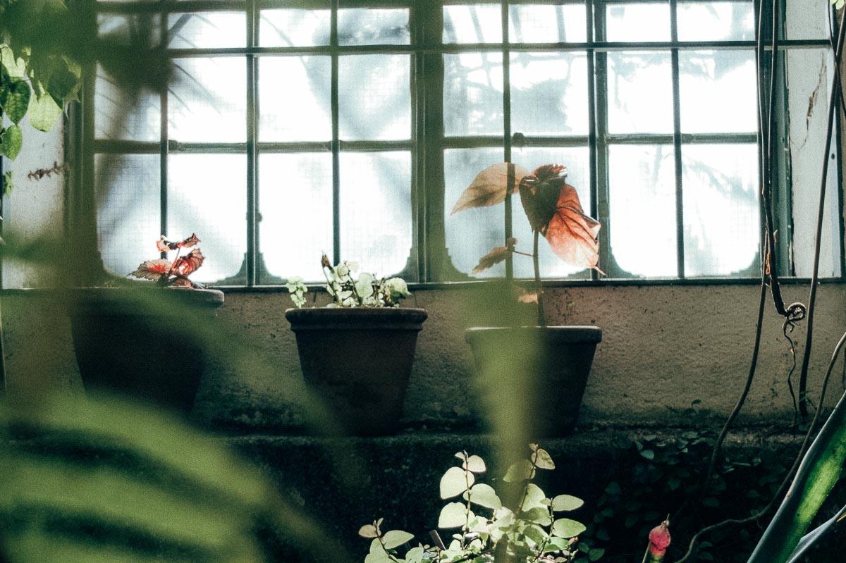 greenhouse-17