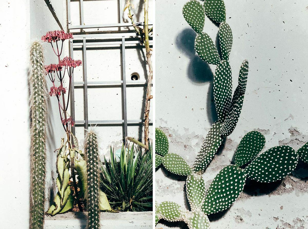 greenhouse-25