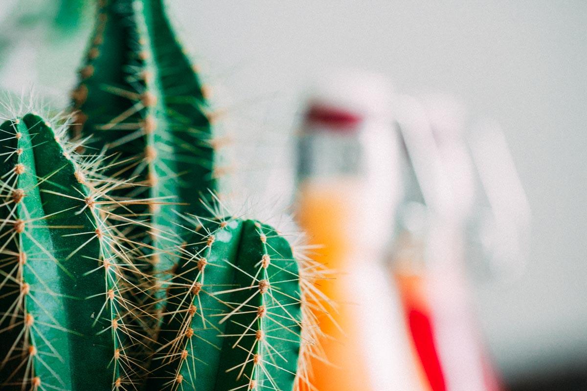 zumos-y-cactus-6